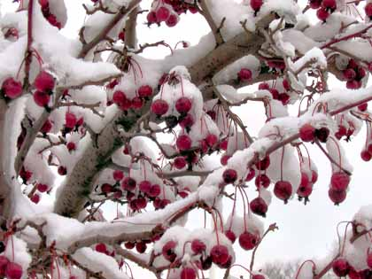 winter-fruit.jpg